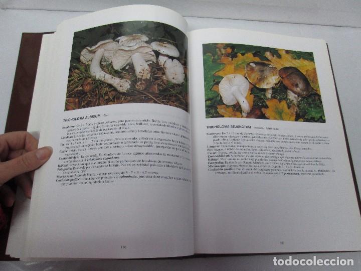 Libros de segunda mano: LAS SETAS EN LA NATURALEZA. TOMO I Y II. RAMON MANDAZA DE ACUÑA. IBERDROLA 1994 Y 1996. VER FOTOS - Foto 24 - 107593479