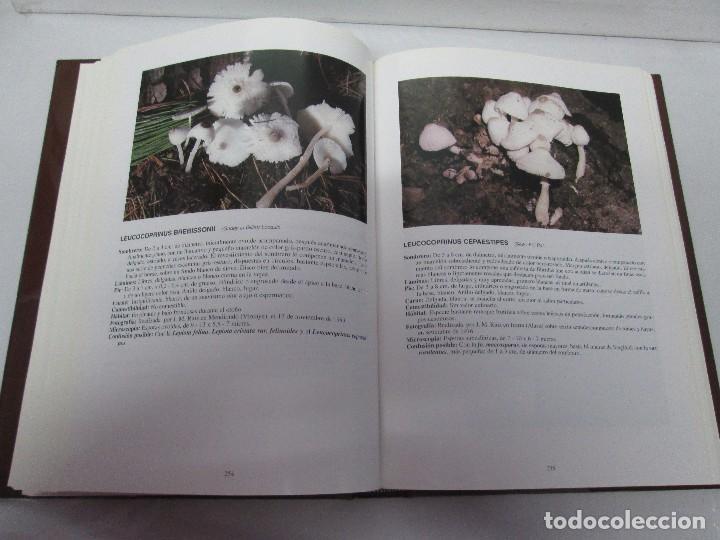 Libros de segunda mano: LAS SETAS EN LA NATURALEZA. TOMO I Y II. RAMON MANDAZA DE ACUÑA. IBERDROLA 1994 Y 1996. VER FOTOS - Foto 25 - 107593479