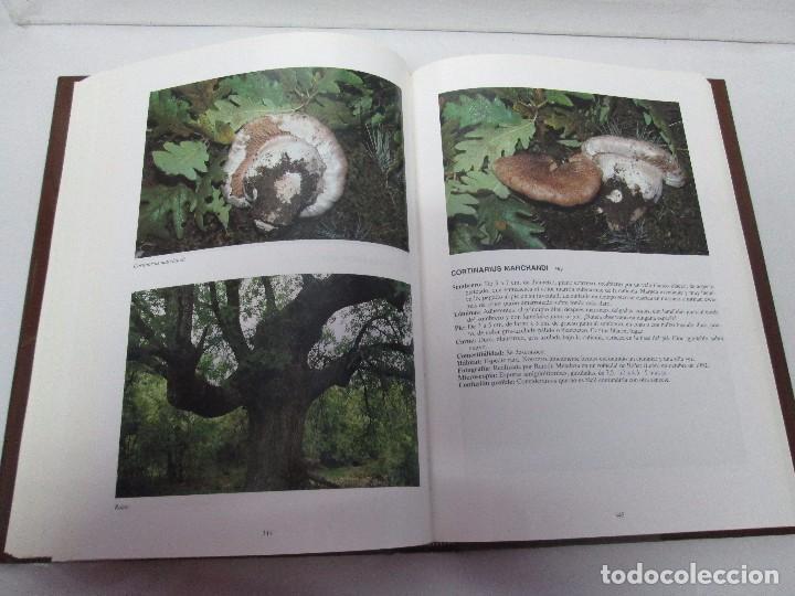 Libros de segunda mano: LAS SETAS EN LA NATURALEZA. TOMO I Y II. RAMON MANDAZA DE ACUÑA. IBERDROLA 1994 Y 1996. VER FOTOS - Foto 26 - 107593479