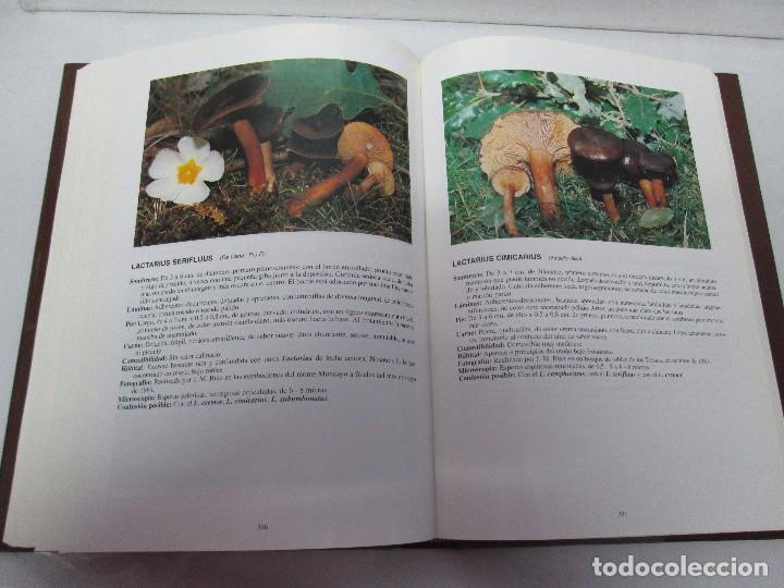 Libros de segunda mano: LAS SETAS EN LA NATURALEZA. TOMO I Y II. RAMON MANDAZA DE ACUÑA. IBERDROLA 1994 Y 1996. VER FOTOS - Foto 27 - 107593479