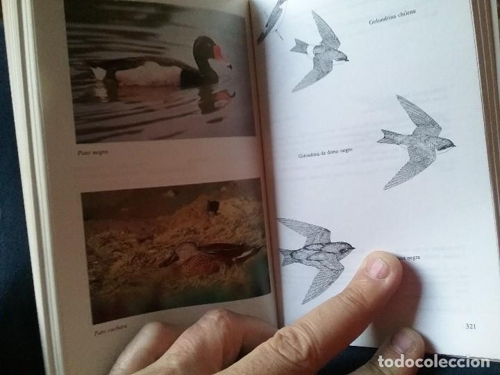 Libros de segunda mano: Guia de campo de las aves de Chile, por Araya y Millie. Ilustrada (Ornitología) - Foto 2 - 110126255