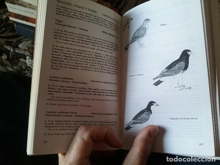 Libros de segunda mano: Guia de campo de las aves de Chile, por Araya y Millie. Ilustrada (Ornitología) - Foto 4 - 110126255