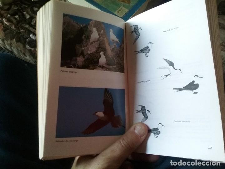 Libros de segunda mano: Guia de campo de las aves de Chile, por Araya y Millie. Ilustrada (Ornitología) - Foto 5 - 110126255