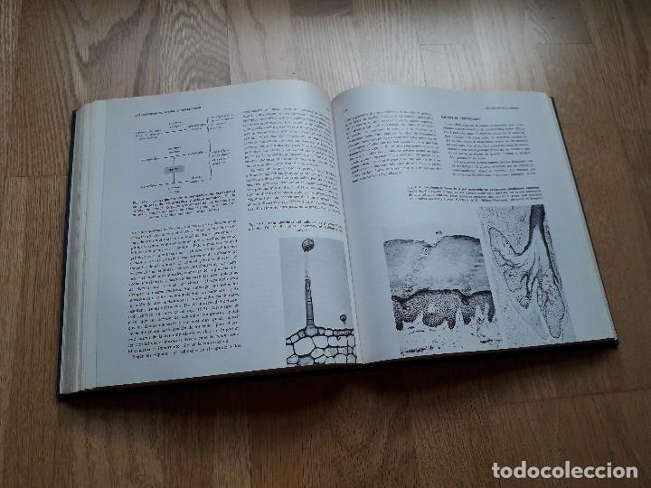 Libros de segunda mano: ELEMENTOS DE BIOLOGÍA / PAUL B. WEISZ / EDICIONES OMEGA, 1ª EDICIÓN - 1968 - Foto 4 - 111848423