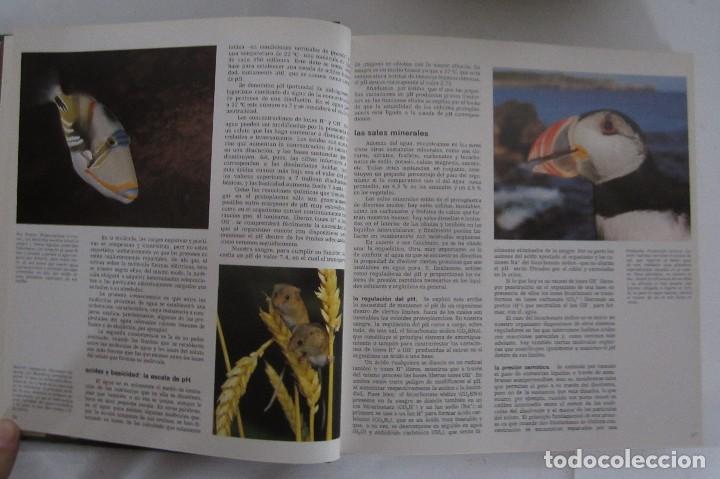 Libros de segunda mano: Historia Natural. De Biblioteca Cultural. Compendio de la vida en todas sus formas - Foto 5 - 113108483