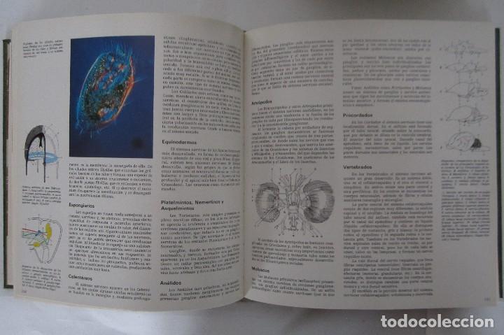 Libros de segunda mano: Historia Natural. De Biblioteca Cultural. Compendio de la vida en todas sus formas - Foto 6 - 113108483