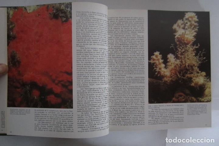 Libros de segunda mano: Historia Natural. De Biblioteca Cultural. Compendio de la vida en todas sus formas - Foto 8 - 113108483