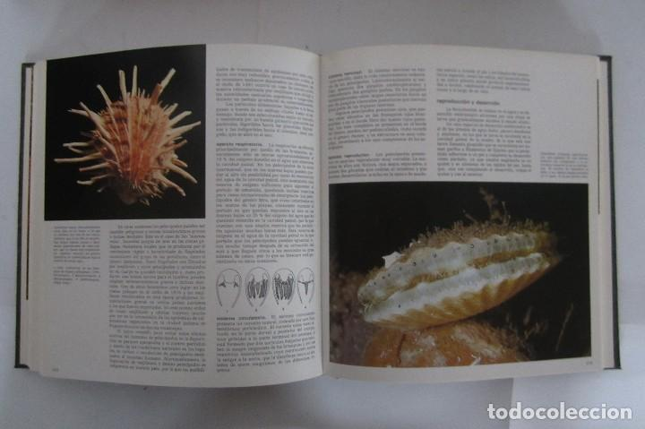 Libros de segunda mano: Historia Natural. De Biblioteca Cultural. Compendio de la vida en todas sus formas - Foto 10 - 113108483