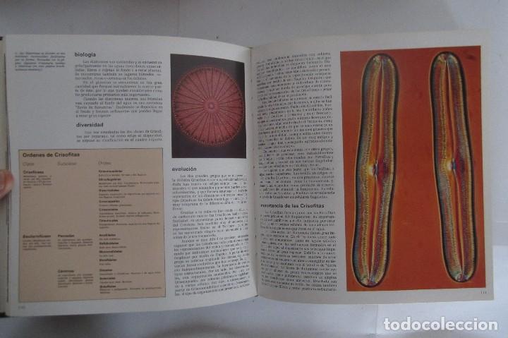 Libros de segunda mano: Historia Natural. De Biblioteca Cultural. Compendio de la vida en todas sus formas - Foto 12 - 113108483