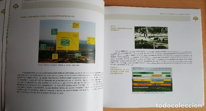 Libros de segunda mano: Dinámica de las Dehesas de Sierra Morena. Forestal Espacios naturales Reserva Biosfera - Foto 4 - 235635755