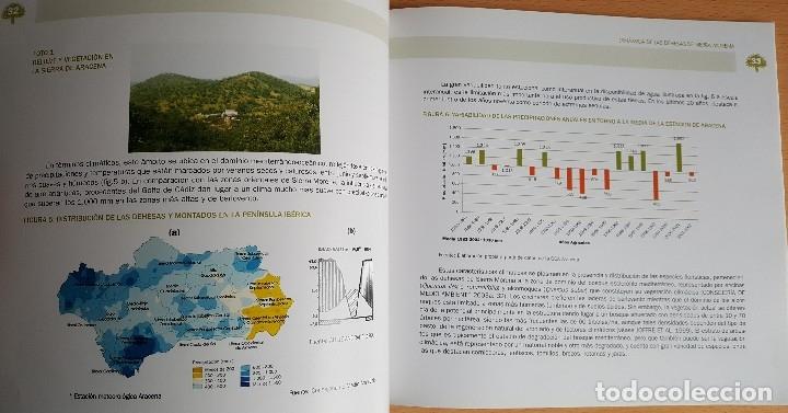 Libros de segunda mano: Dinámica de las Dehesas de Sierra Morena. Forestal Espacios naturales Reserva Biosfera - Foto 5 - 235635755