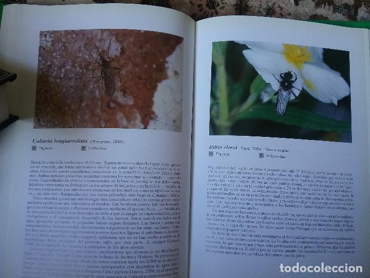 Libros de segunda mano: Insectos de Canarias, de VVAA. Cientos de fichas con foto a color. Excelente estado (entomologia) - Foto 6 - 115383747