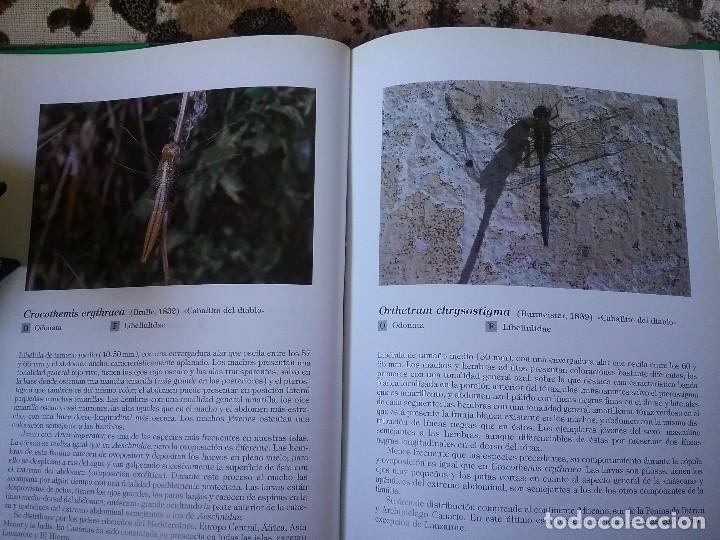 Libros de segunda mano: Insectos de Canarias, de VVAA. Cientos de fichas con foto a color. Excelente estado (entomologia) - Foto 7 - 115383747
