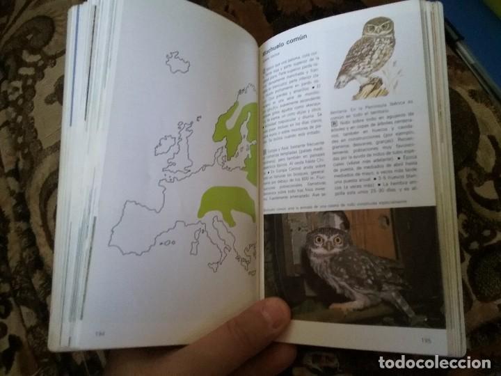 Libros de segunda mano: Guias de aves, de Einhard Bezzel. Piramide, 1984. Picos, buhos, rapaces, palomas, gallinaceas y otro - Foto 3 - 120052383
