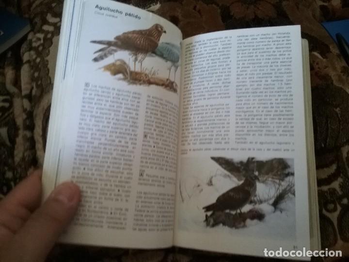 Libros de segunda mano: Guias de aves, de Einhard Bezzel. Piramide, 1984. Picos, buhos, rapaces, palomas, gallinaceas y otro - Foto 6 - 120052383