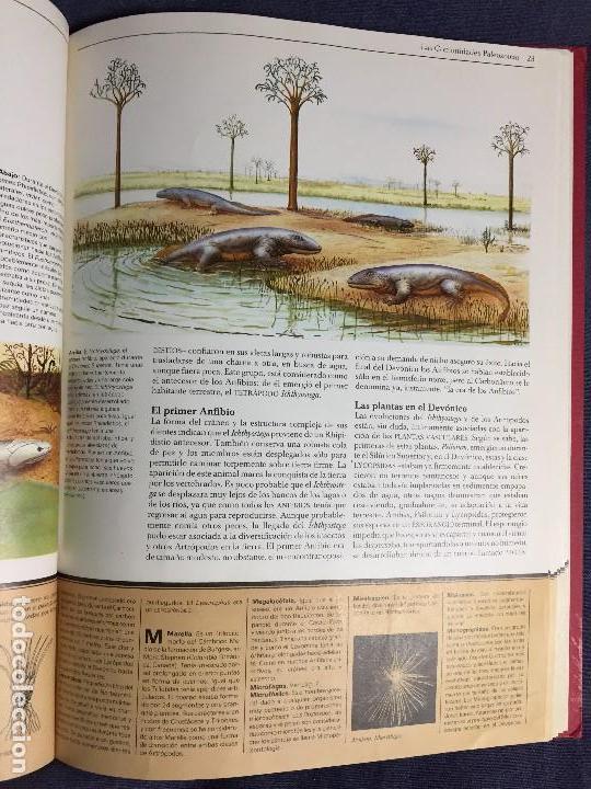 Libros de segunda mano: EL MUNDO PREHISTORICO JOHN MOODY VIDORAMA 31,5X23,5CMS - Foto 7 - 121101523
