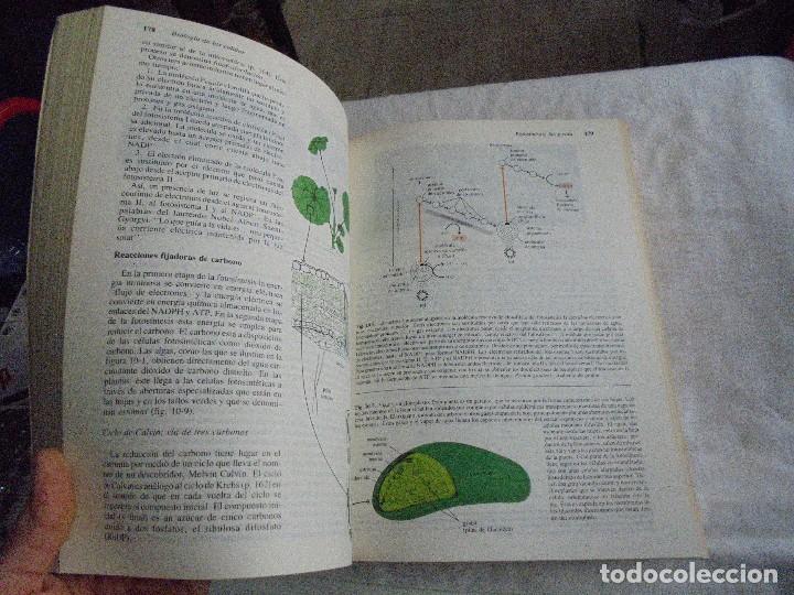 Libros de segunda mano: INVITACION A LA BIOLOGIA.HELENA CURTIS/N.SUE BARNES.EDITORIAL PANAMERICANA 1987 - Foto 9 - 121444955
