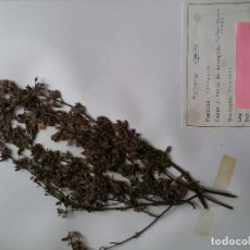 Libros de segunda mano: 1984- HERBARIO FACULTAD DE BIOLÓGICAS- LEÓN - ORIGINAL DOS CARPETAS PLANTAS. Lote 124203791