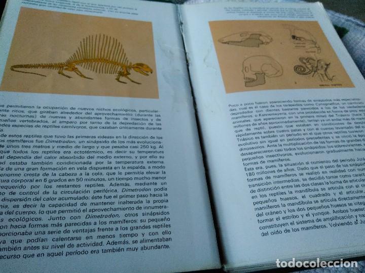 Libros de segunda mano: GUÍA DE MAMÍFEROS. GRIJALBO - Foto 2 - 125221863
