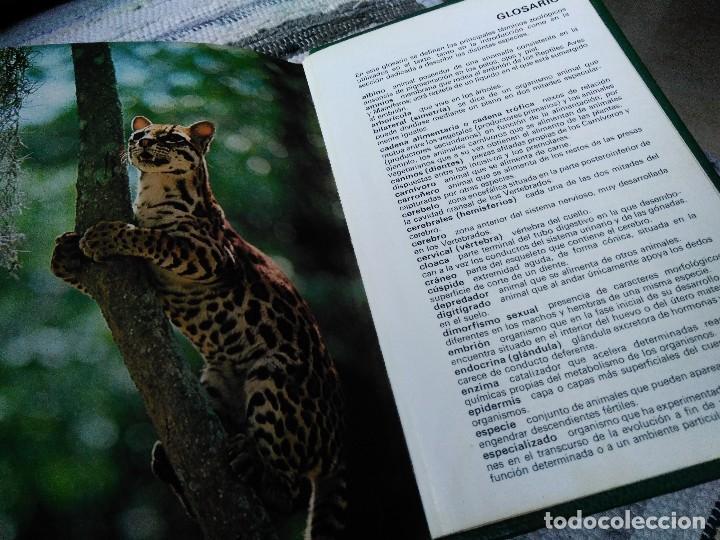 Libros de segunda mano: GUÍA DE MAMÍFEROS. GRIJALBO - Foto 4 - 125221863