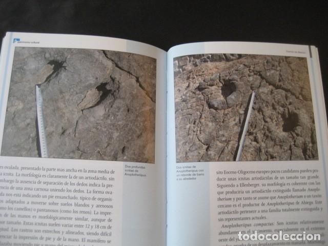 Libros de segunda mano: LIBRO FOSILES, ICNITAS DE ABIEGO (HUESCA). FOSIL, PALEONTOLOGIA, DINOSAURIOS - Foto 5 - 126119619