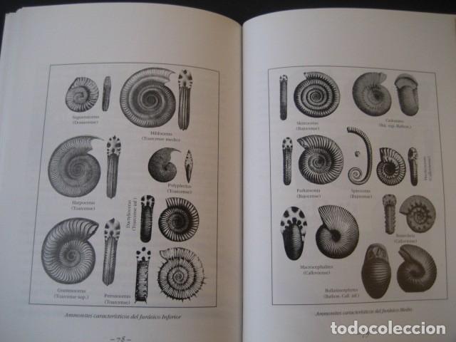 Libros de segunda mano: LIBRO: LOS FOSILES EN ARAGON. PALEONTOLOGIA, AMMONITES, TRILOBITES, DINOSAURIOS - Foto 3 - 141337888