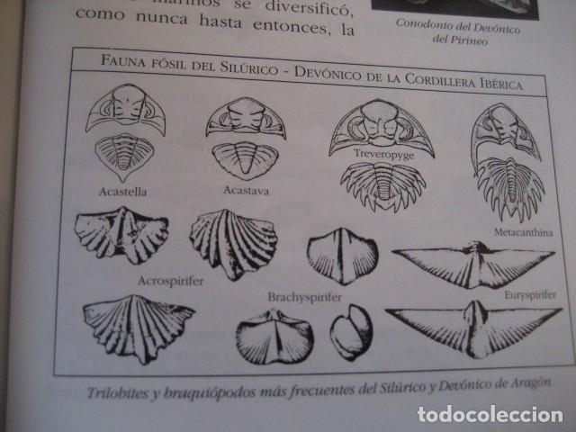 Libros de segunda mano: LIBRO: LOS FOSILES EN ARAGON. PALEONTOLOGIA, AMMONITES, TRILOBITES, DINOSAURIOS - Foto 4 - 141337888