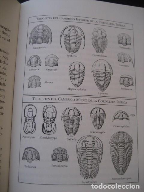 Libros de segunda mano: LIBRO: LOS FOSILES EN ARAGON. PALEONTOLOGIA, AMMONITES, TRILOBITES, DINOSAURIOS - Foto 5 - 141337888