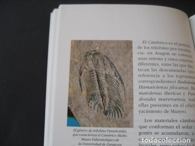 Libros de segunda mano: LIBRO: LOS FOSILES EN ARAGON. PALEONTOLOGIA, AMMONITES, TRILOBITES, DINOSAURIOS - Foto 6 - 141337888