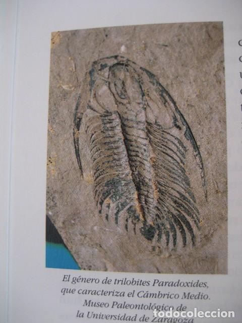 Libros de segunda mano: LIBRO: LOS FOSILES EN ARAGON. PALEONTOLOGIA, AMMONITES, TRILOBITES, DINOSAURIOS - Foto 7 - 141337888