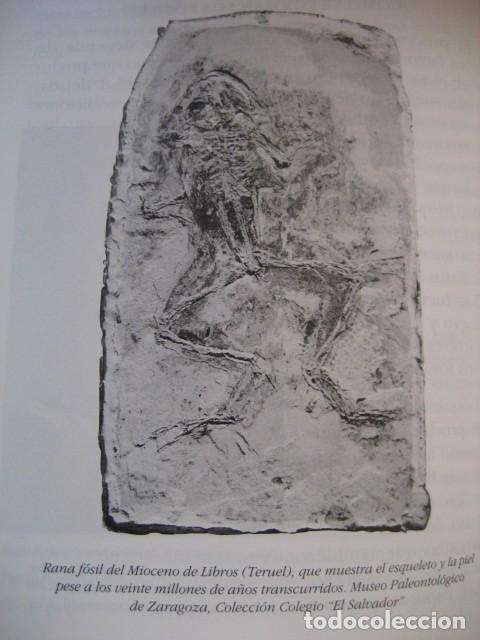Libros de segunda mano: LIBRO: LOS FOSILES EN ARAGON. PALEONTOLOGIA, AMMONITES, TRILOBITES, DINOSAURIOS - Foto 8 - 141337888