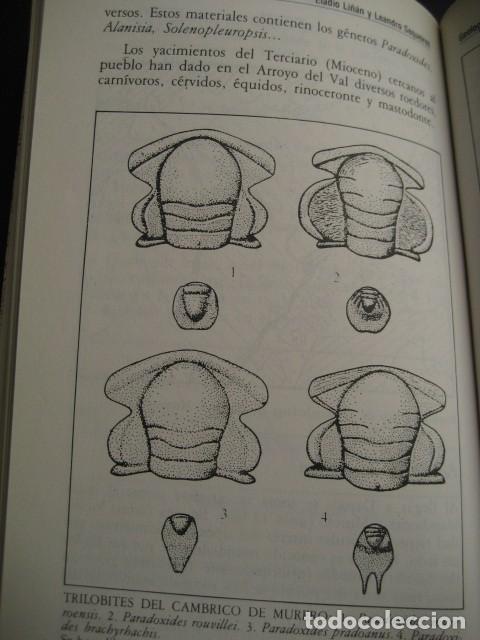 Libros de segunda mano: GEOLOGIA DE ARAGON ROCAS Y FOSILES. PALEONTOLOGIA, FOSIL - Foto 3 - 183006361