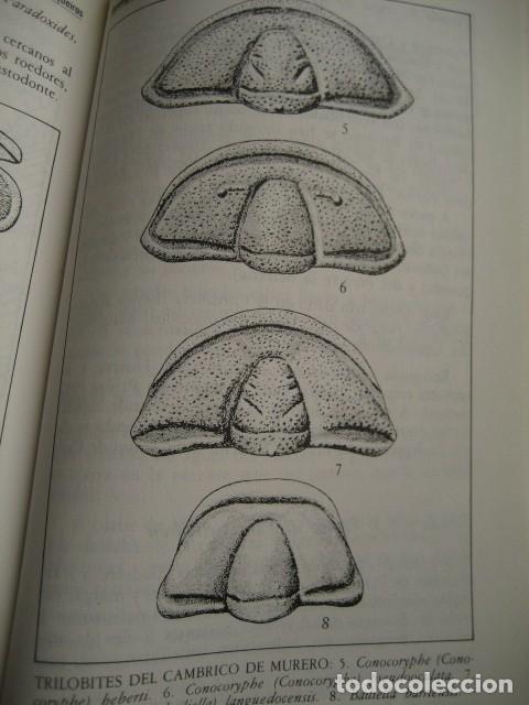Libros de segunda mano: GEOLOGIA DE ARAGON ROCAS Y FOSILES. PALEONTOLOGIA, FOSIL - Foto 4 - 183006361