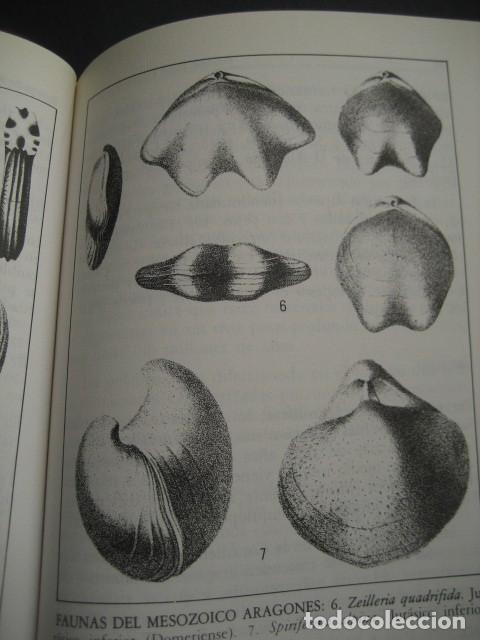 Libros de segunda mano: GEOLOGIA DE ARAGON ROCAS Y FOSILES. PALEONTOLOGIA, FOSIL - Foto 5 - 183006361