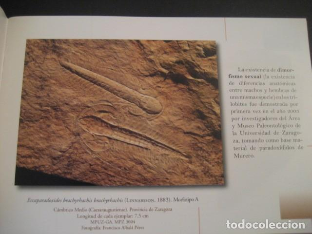 Libros de segunda mano: TESOROS FOSILES DE ARAGON. PALEONTOLOGIA, AMMONITES, TRILOBITES, DINOSAURIOS - Foto 2 - 151654869