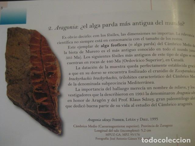 Libros de segunda mano: TESOROS FOSILES DE ARAGON. PALEONTOLOGIA, AMMONITES, TRILOBITES, DINOSAURIOS - Foto 3 - 151654869