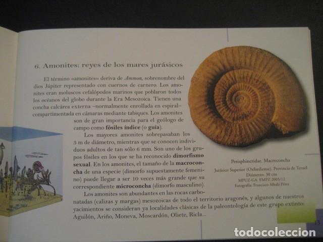 Libros de segunda mano: TESOROS FOSILES DE ARAGON. PALEONTOLOGIA, AMMONITES, TRILOBITES, DINOSAURIOS - Foto 4 - 151654869