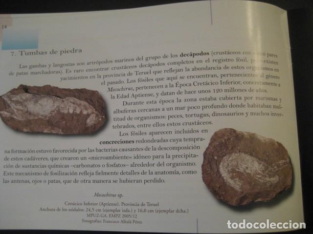 Libros de segunda mano: TESOROS FOSILES DE ARAGON. PALEONTOLOGIA, AMMONITES, TRILOBITES, DINOSAURIOS - Foto 5 - 151654869