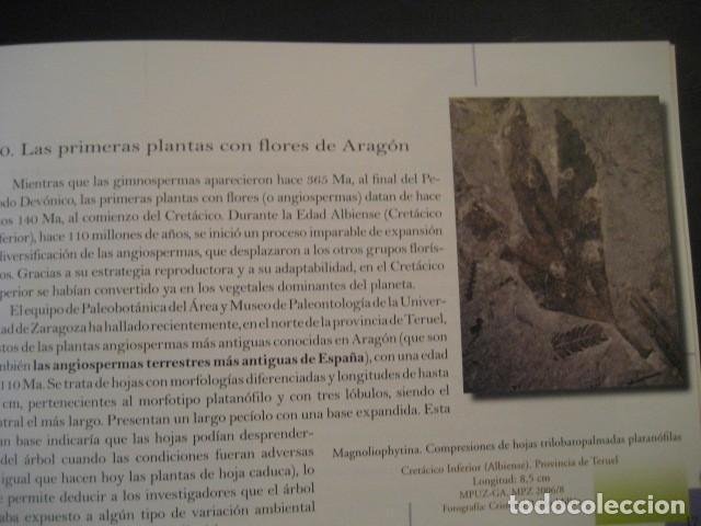 Libros de segunda mano: TESOROS FOSILES DE ARAGON. PALEONTOLOGIA, AMMONITES, TRILOBITES, DINOSAURIOS - Foto 6 - 151654869