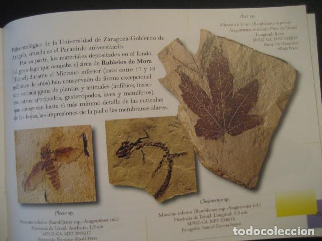 Libros de segunda mano: TESOROS FOSILES DE ARAGON. PALEONTOLOGIA, AMMONITES, TRILOBITES, DINOSAURIOS - Foto 7 - 151654869