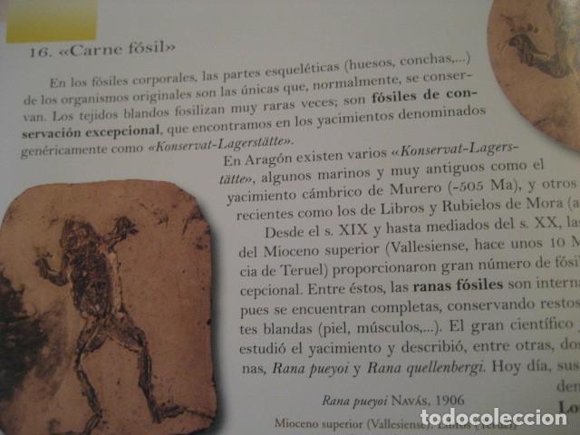 Libros de segunda mano: TESOROS FOSILES DE ARAGON. PALEONTOLOGIA, AMMONITES, TRILOBITES, DINOSAURIOS - Foto 8 - 151654869