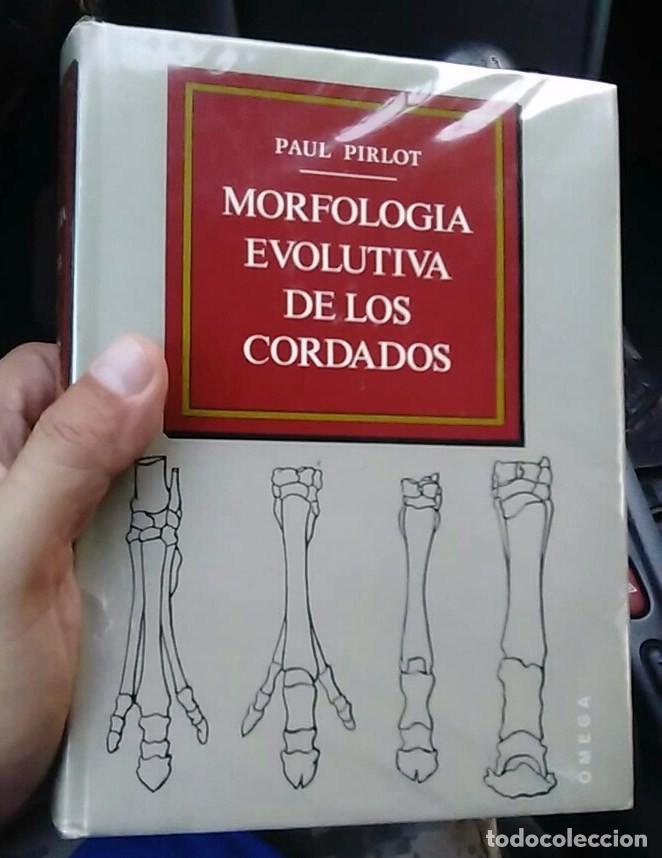 morfología evolutiva de cordados paul pirlot om - Comprar Libros de ...
