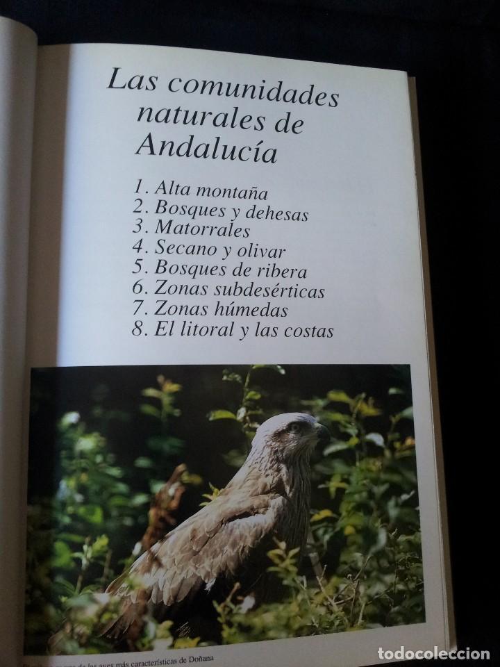 Libros de segunda mano: GABRIEL GARCIA GUARDIA - HISTORIA NATURAL DE ANDALUCÍA - EDITORIAL RUEDA 1991 - Foto 3 - 126585987