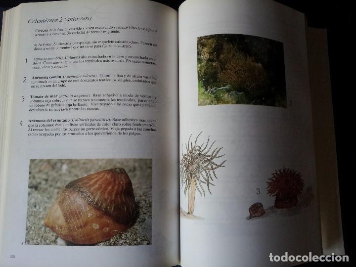 Libros de segunda mano: GABRIEL GARCIA GUARDIA - HISTORIA NATURAL DE ANDALUCÍA - EDITORIAL RUEDA 1991 - Foto 6 - 126585987