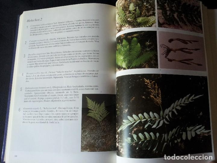 Libros de segunda mano: GABRIEL GARCIA GUARDIA - HISTORIA NATURAL DE ANDALUCÍA - EDITORIAL RUEDA 1991 - Foto 7 - 126585987