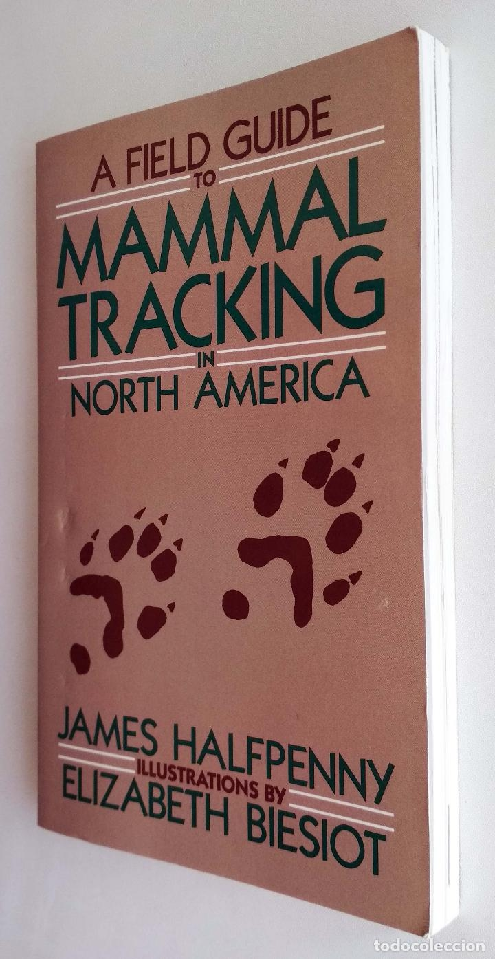Animal Tracks in Full Life Size Track Pack