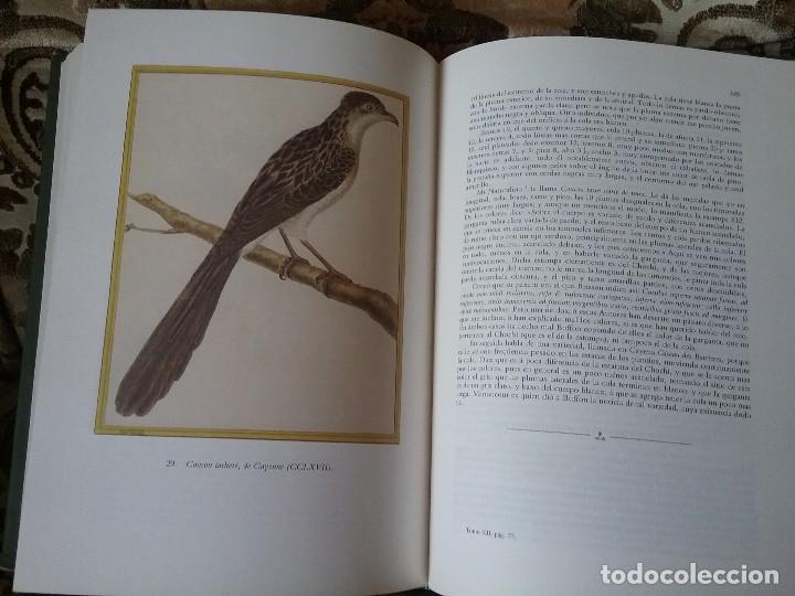 Libros de segunda mano: Apuntamientos para la Historia Natural de los Paxaros del Paraguay y del Rio de la Plata. Laminas. - Foto 2 - 129177103