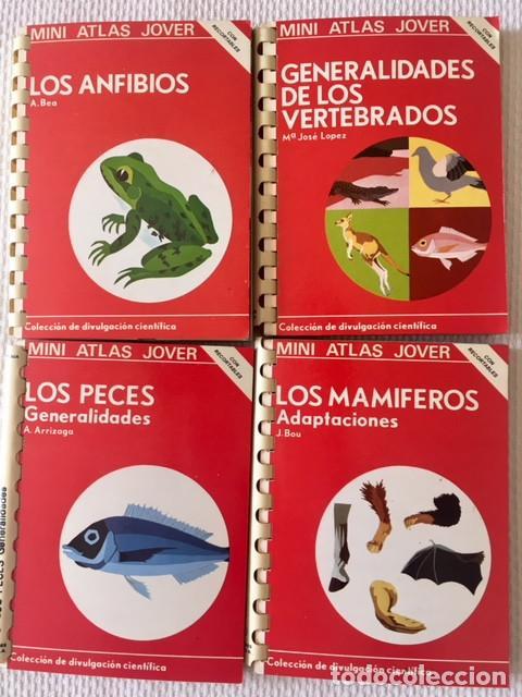 4 MINI ATLAS JOVER: LOS MAMÍFEROS...- GENERALIDADES DE LOS VERTEBRADOS - LOS PECES... - LOS ANFIBIOS (Libros de Segunda Mano - Ciencias, Manuales y Oficios - Biología y Botánica)