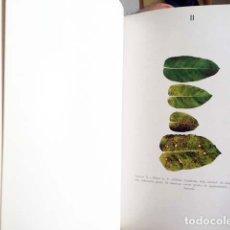 Libros de segunda mano: ANALES 1964 (PINO SILVESTRE; MASAS FORESTALES ESPAÑOLAS; HONGOS ALCORNOQUE... INSTITUTO FORESTAL. Lote 133225458