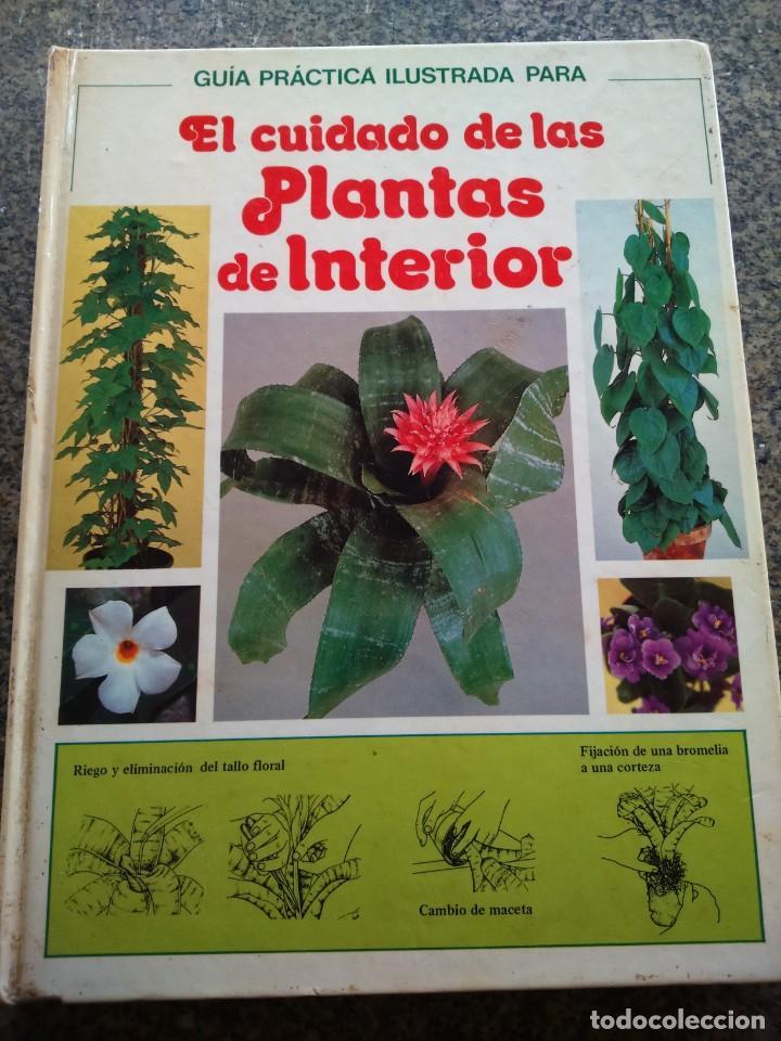 EL CUIDADO DE LAS PLANTAS DE INTERIOR -- GUIA PRACTICA -- CIRCULO 1981 -- (Libros de Segunda Mano - Ciencias, Manuales y Oficios - Biología y Botánica)